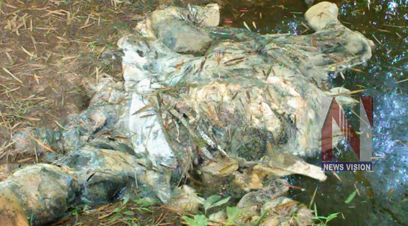 malayattoor-elephant-death-2